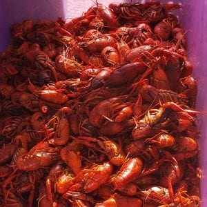 Crawfish in Villas at White Oak